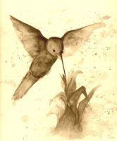 Colibri sepia