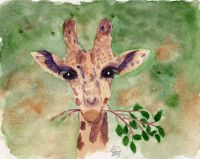Giraffe with branch