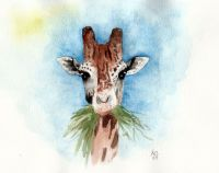 Giraffe with grass