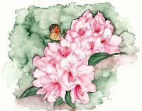 Rhododendron und Aurorafalter